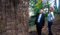 4 Bin 112 yaşındaki ağaca yoğun ilgi