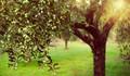 Zeytinlikleri imara açma inadı