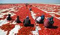 Kurutulan domatesler Avrupa mutfağında