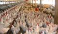 Türkiye beyaz ette 81 bölgeye ayrıldı