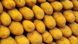 Patatesin fiyatı yükselişe geçti