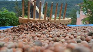 OGM, Türkiye'nin en büyük fındık üreticileri arasına girdi