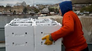 Karadeniz'de palamut arttı, hamsi azaldı