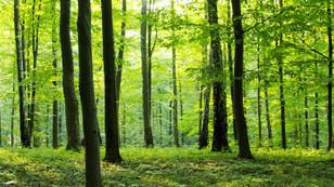 Endüstriyel orman miktarı iki katına çıkarılacak
