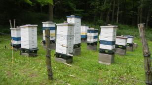 Arı kolonilerinde kış kayıplarını engellemek mümkün