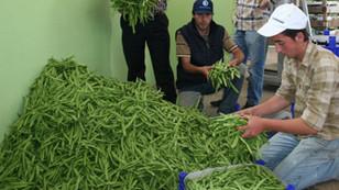 Fasulye üretiminin kalbi Burdur'da hal kurulacak