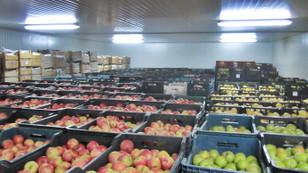 Çöpe giden sebze meyveyi kurtarmak için teşvik