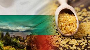 Bulgar firma bulgur ithal edecek