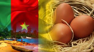 Kamerunlu müşteri kuluçkalık yumurta ithal edecek