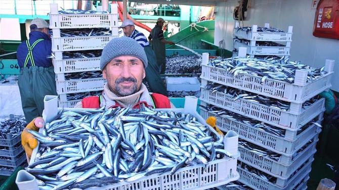 Hamsi balıkçıyı üzüyor