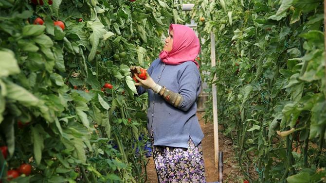 Bursa'da 75 kadın çiftçi iş sahibi olacak