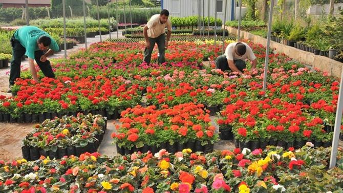 Kesme çiçekte Kenya'nın gerisindeyiz