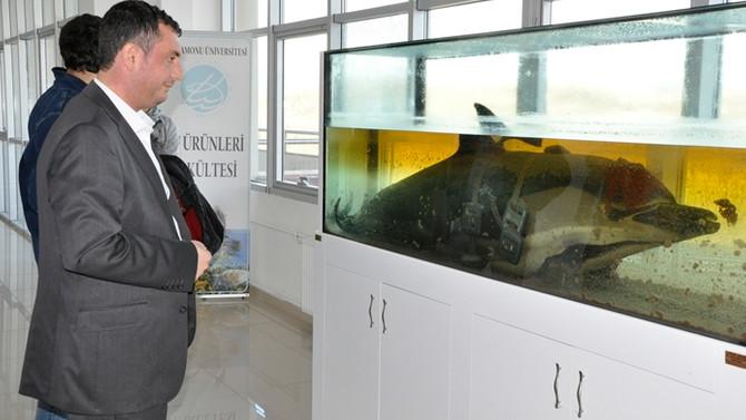 Balık ölümlerine otopsili araştırma