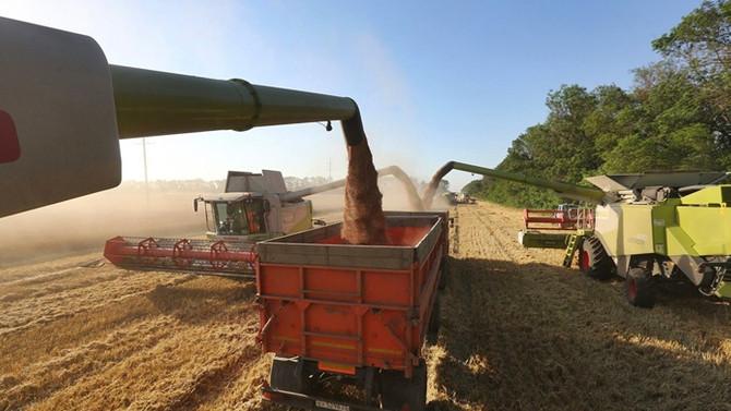 TMO, buğday ithal edecek