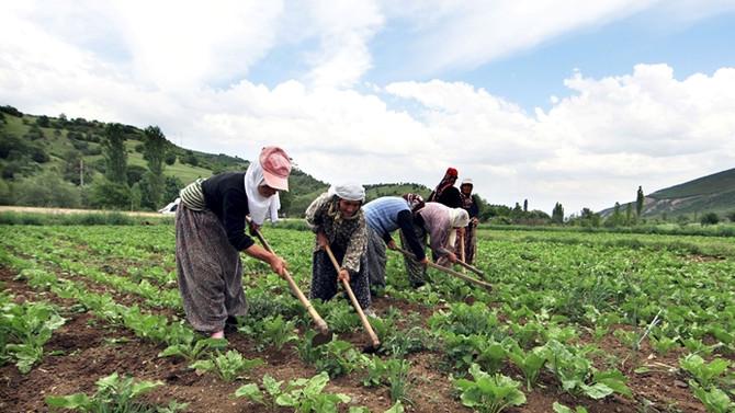 Tarım işsizliği 2.2 puan düşürdü