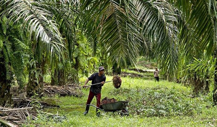 Palm yağı mercek altında