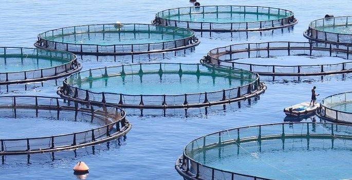 Kültür balıkçılığı deniz mahsullerine rakip oldu