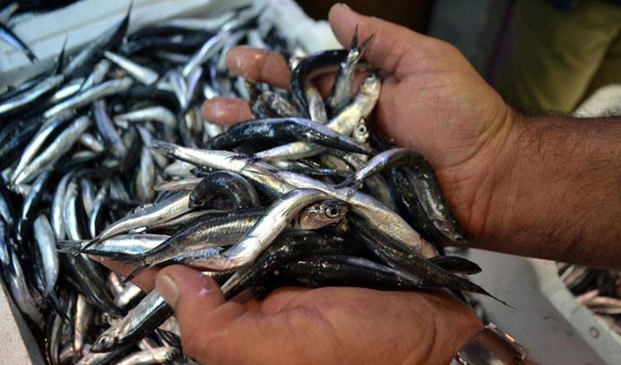Karadenizli balıkçılar 'hamsi'den üzgün