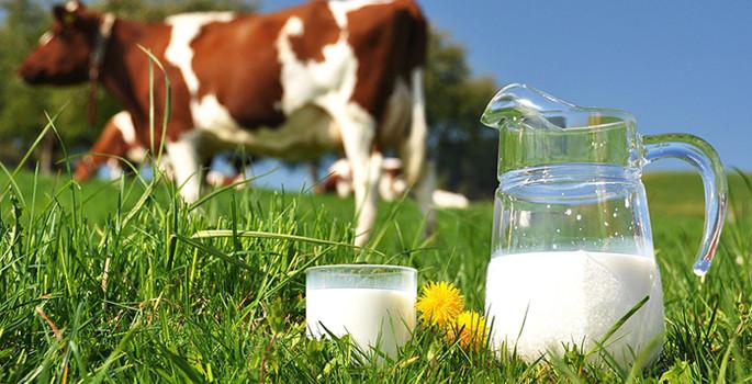 Toplanan süt miktarı arttı