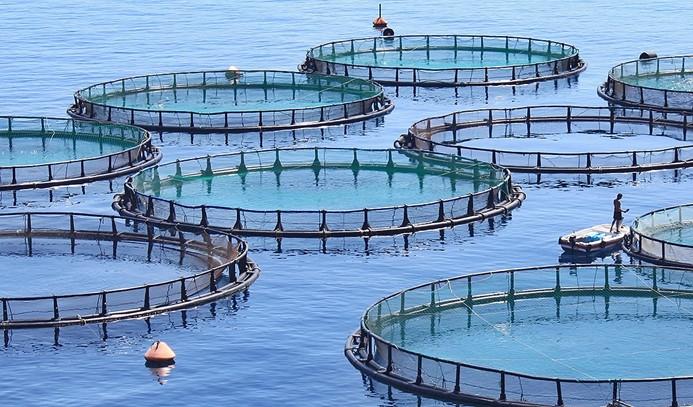 Su ürünleri ihracatı yüzde 15 arttı