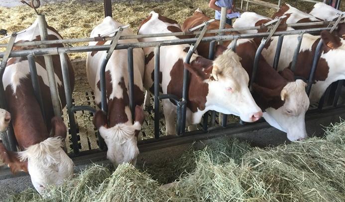 Kırmızı et üretimi 4. çeyrekte yüzde 31 azaldı