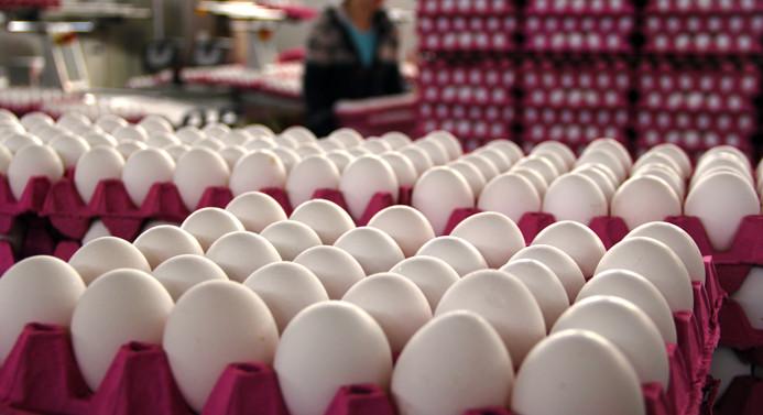 Ocak ayında 1.6 milyar tavuk yumurtası üretildi