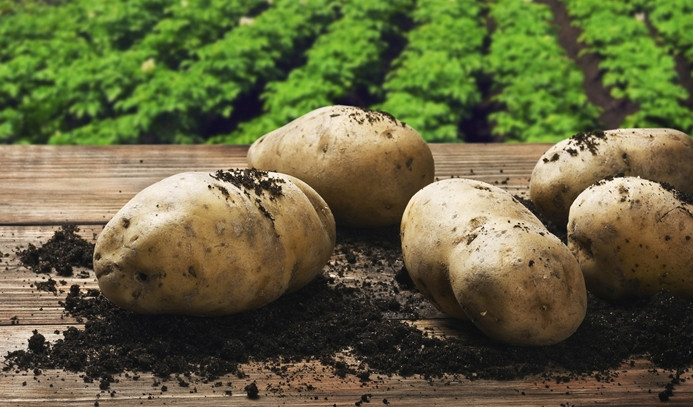 Nisanda zam şampiyonu 'patates'