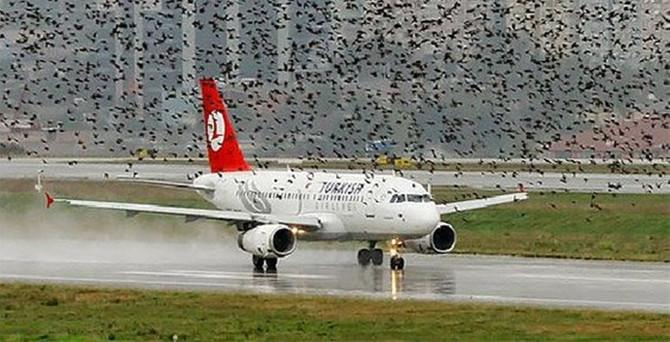 Uçaklar için kuş tehlikesini bitirecek buluş