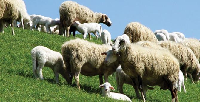 Hayvancılıkta hibe başvurularına 1 ay erteleme