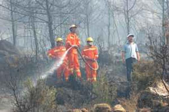 İzmir'de çam ormanında yangın