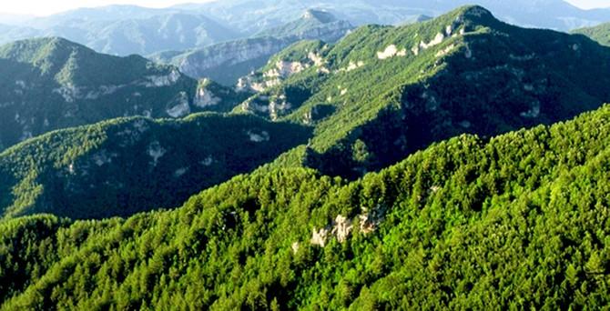 Türkiye'de orman varlığı artıyor