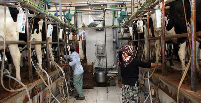 TZOB: Süt üreticisi bir yıldır insaf bekliyor