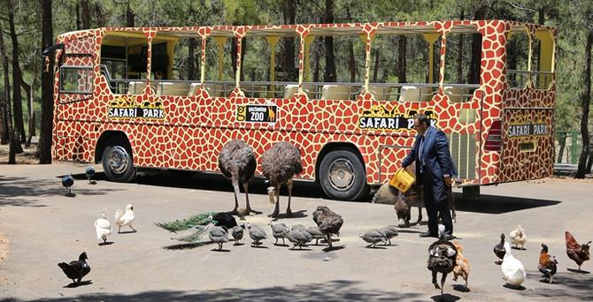 Gaziantep'teki safari parkına ziyaretçi akını