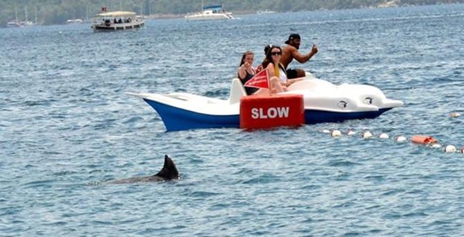Marmaris'te köpek balığı paniği