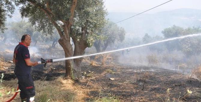 Kuşadası'nda zeytinlik yangını