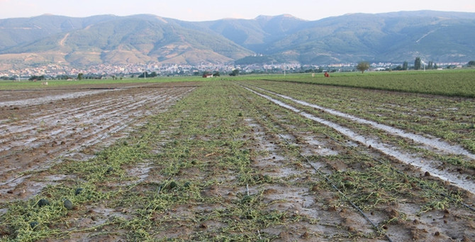 Tarım sigortasında yüzde 52 artış