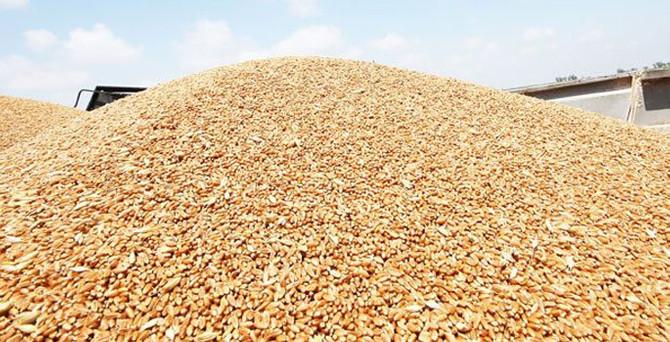 96 ton buğdaya ne oldu?