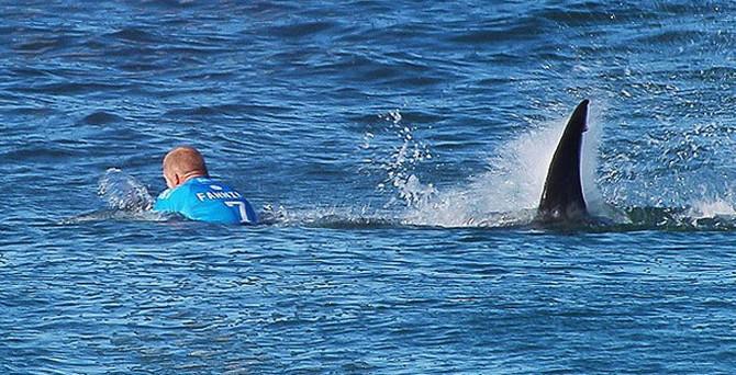 Sörfçüye köpek balığı böyle saldırdı