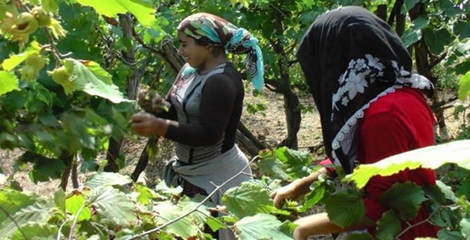Mevsimlik tarım işçileri fındıktan umutlu