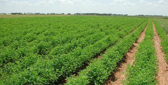 Yenişehir, tarıma dayalı sanayiyle dünyaya açılacak