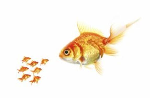 Sakın Küçük Balık Büyük Balığı Yutmasın