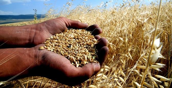 'Buğday üretimi 30 milyon tonu bulabilir'