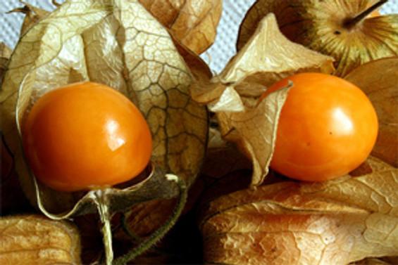 Altın çileğe meyve izni