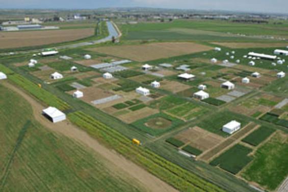 Tarım Fuarı tarlada düzenleniyor