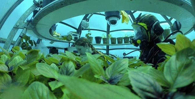 Nemo'nun bahçesi ile deniz altında tarım