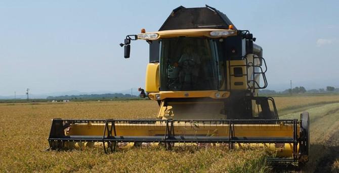 Pirinç ambarı İpsala, stok sorununu tanıtımla aşacak