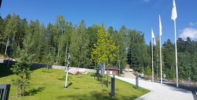 Finlandiya'nın yeşil altını: Ormanlar