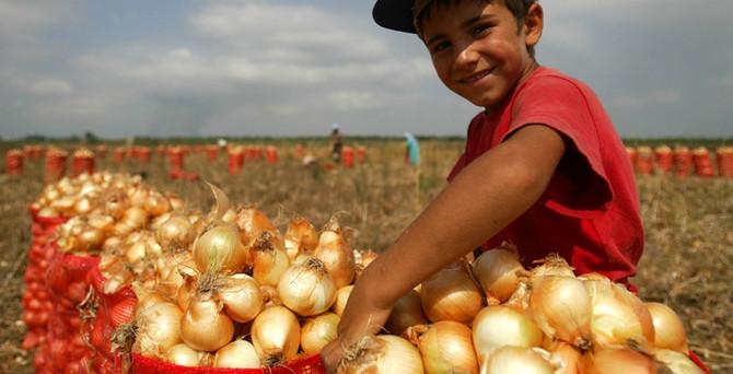 Soğan üreticisi 'depo desteği' istiyor