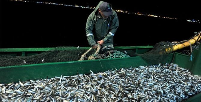 İstavrit balıkçının yüzünü güldürdü
