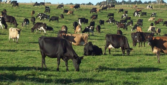 TZD: Et ithalatı hayvancılığımızın sonunu getirir